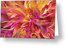 Magenta Sunshine Greeting Card by Cindy Greenstein