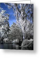 Magnolia Plantation In Grey Greeting Card