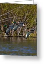 Mallards Flying By Greeting Card