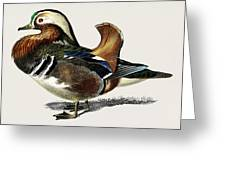 Mandarin Duck  Aix Galericulata Illustrated By Charles Dessalines D' Orbigny  1806-1876 1 Greeting Card