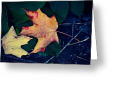 Maple And Ground Greeting Card