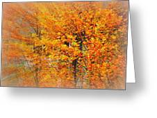 Maple Focal Zoom Greeting Card