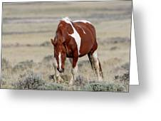 Mare Wapiti Greeting Card by Ronnie and Frances Howard