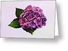 Maroon Hydrangea Greeting Card