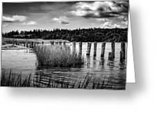 Mccormack's Beach Provincial Park, Black And White Greeting Card