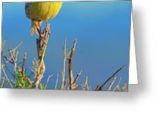 Meadowlark Greeting Card by John De Bord