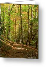 Meigs Creek Trailhead In Smoky Mountains National Park Greeting Card