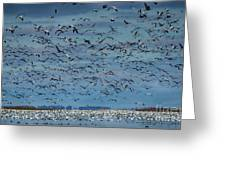 Migration Of The Snow Geese Greeting Card