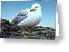 Moewe Seagull Greeting Card