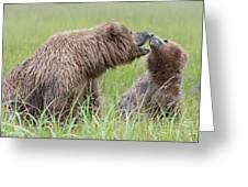 fb6d29b5 Momma Bear Playing With Baby Bear Photograph by Linda D Lester