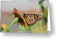Monarch 2018-28 Greeting Card