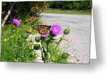 Monarch Butterfly Danaus Plexippus On A Thistle Greeting Card
