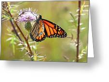 Monarch Butterfly On Thistle 2 Greeting Card