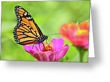 Monarch Butterfly Square Greeting Card