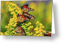 Monarch Gathering 2 Greeting Card