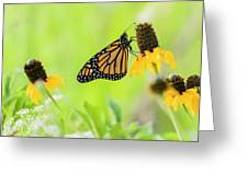 Monarch On Wildflowers Greeting Card