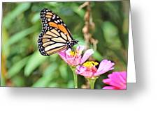 Monarch's Stance... Greeting Card