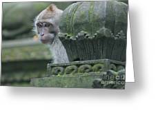 Monkey Forest Greeting Card