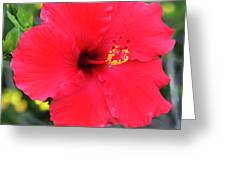 Montecito Perfection Greeting Card