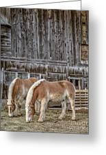 Morgan Horses By The Barn Greeting Card