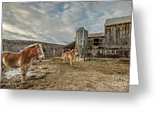 Morgan Horses Pomfret Vermont Greeting Card