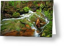 Mossy Glen Rollers Greeting Card