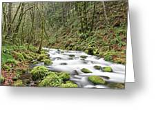 Mossy Stream Greeting Card by Nicole Young