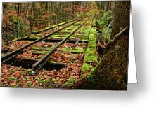 Mossy Train Track In Fall Greeting Card