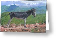 Mountain Donkey  Greeting Card