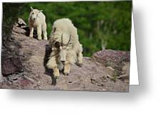 Mountain Goats- Nanny And Kid Greeting Card