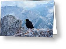 Mountain Jackdaw Greeting Card