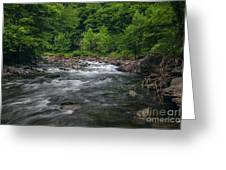 Mountain Stream In Summer #2 Greeting Card by Tom Claud