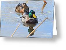 Mr And Mrs Duck Greeting Card