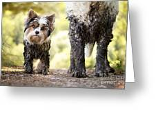 Muddy Little Dog Stands Next To A Muddy Greeting Card