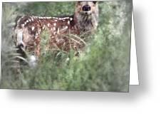 Mule Deer Fawn Greeting Card by Brad Allen Fine Art