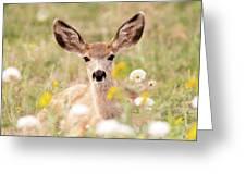 Mule Deer Fawn Lying In Wildflowers Greeting Card