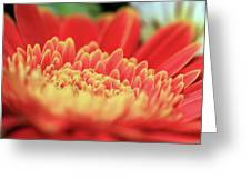 Mum Flower Greeting Card