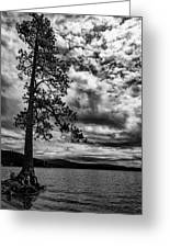 My Favorite Tree Black And White Greeting Card