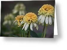 Nana's Garden Greeting Card