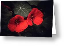 Nasturtium Drama Greeting Card