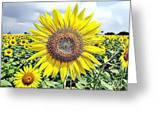 Naturalness And Flowers 51 Greeting Card