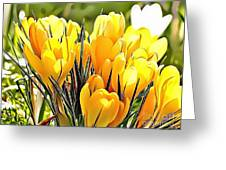 Naturalness And Flowers 56 Greeting Card