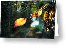 Nature's Glow Greeting Card