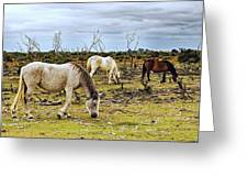 New Forest Ponies On The Heath Greeting Card