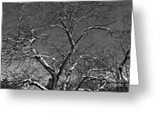 Niagara Falls Winter Textures Greeting Card