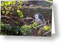 Night Heron At The Palace Revisited Greeting Card by Kate Brown