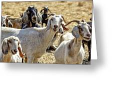 Norris's Happy Goats Greeting Card