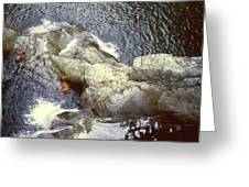 Not Your Average Swimming Hole 3  Greeting Card