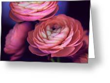 Ranunculus Trio Greeting Card