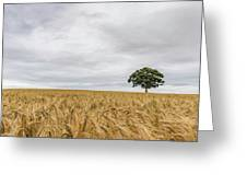 Oak And Barley Greeting Card by Nick Bywater